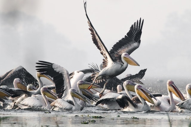 birds in bharatpur bird sanctuary