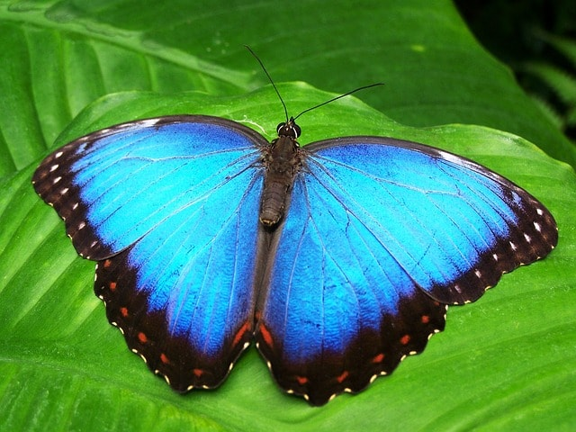 FACTS ABOUT BUTTERFLY WINGS